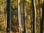 Természetfotók - fák és cserjék
